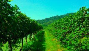 Exploring our Monticello Wine Trail