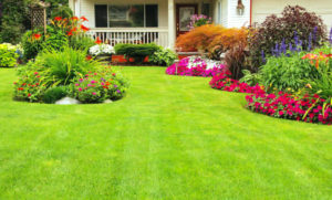 Getting your yard ready for Spring